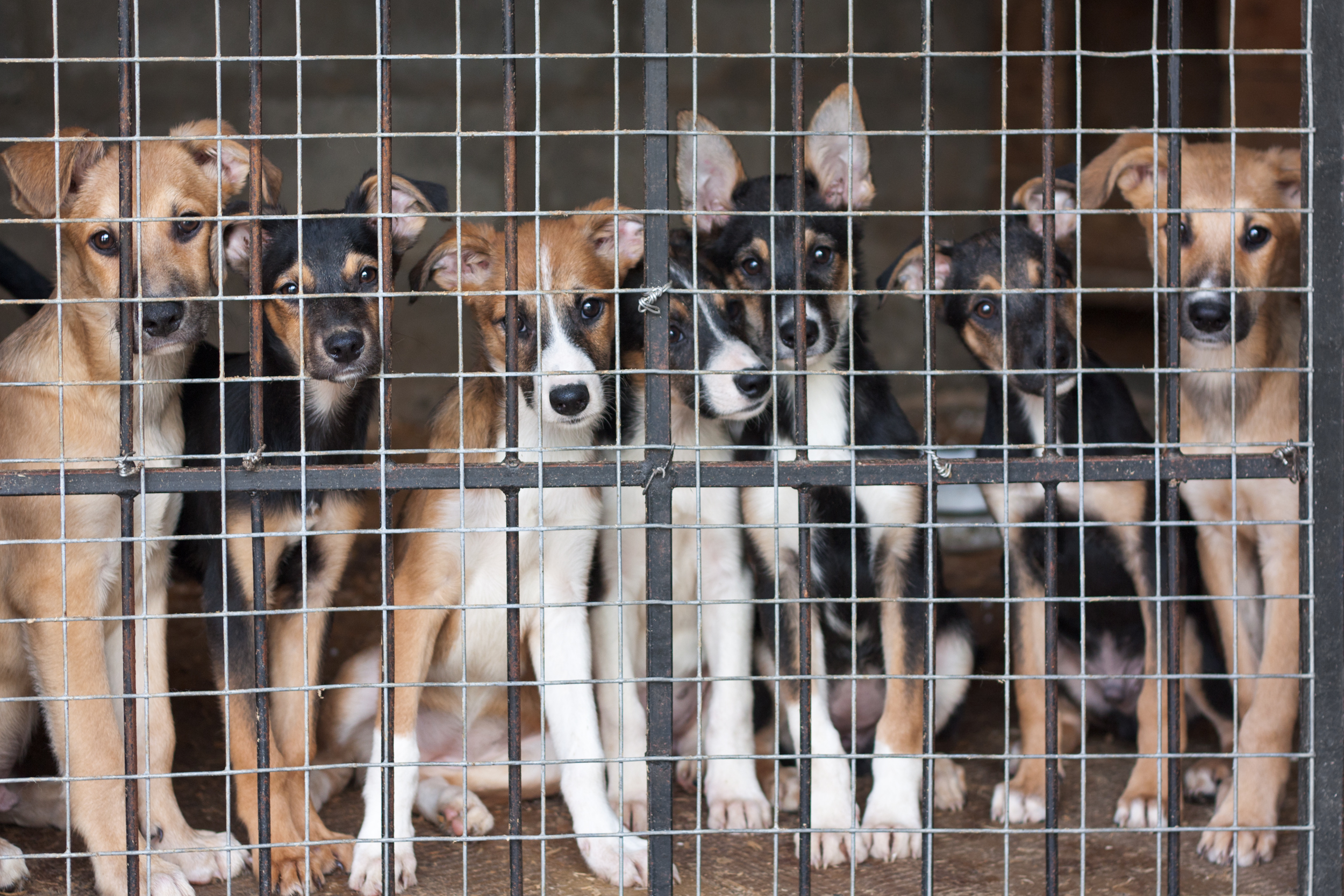 seprona finds 32 violations in local animal shelters   the