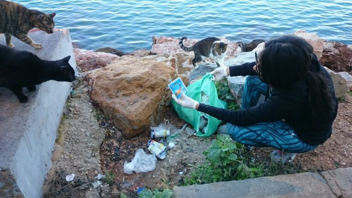 Torrevieja expand control of cats in the city