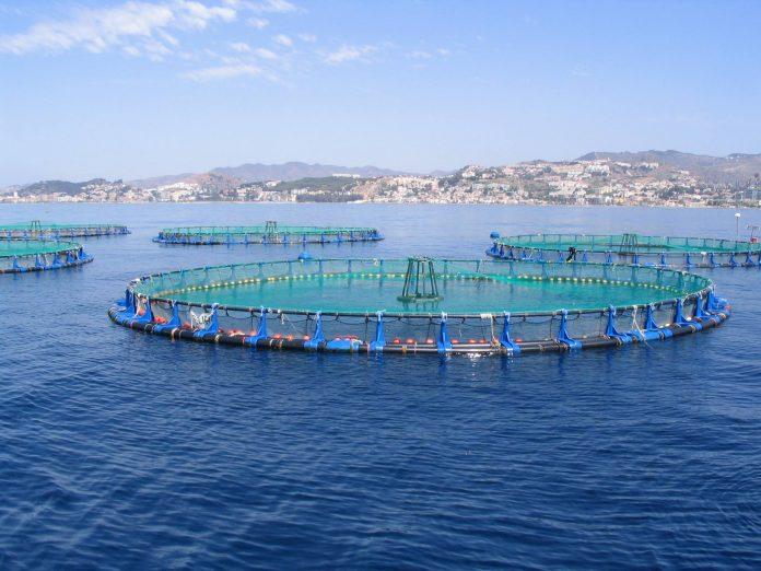 Orihuela diver dies on Guardamar fish farm