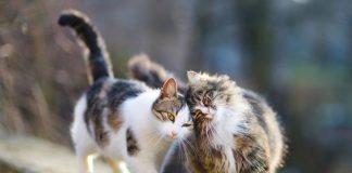 Cats poisoned in Pilar de la Horadada