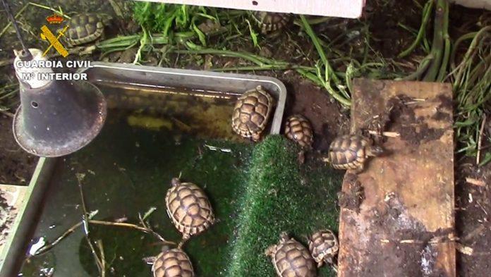 Illegal turtle hatchery found in San Pedro del Pinatar