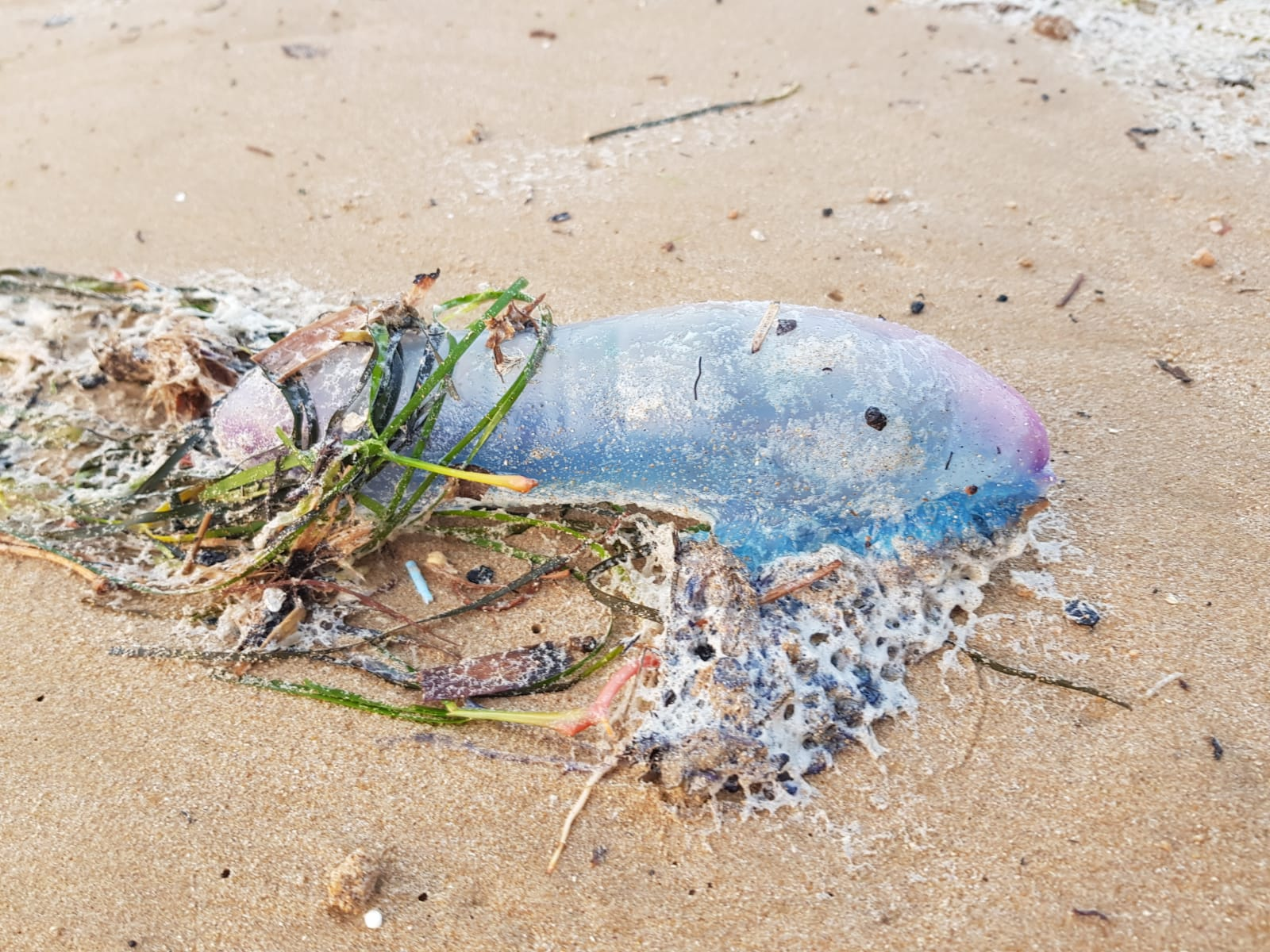 Extreme caution required when using local beaches