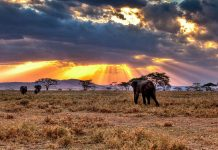 3 Facts you might not know about The Serengeti