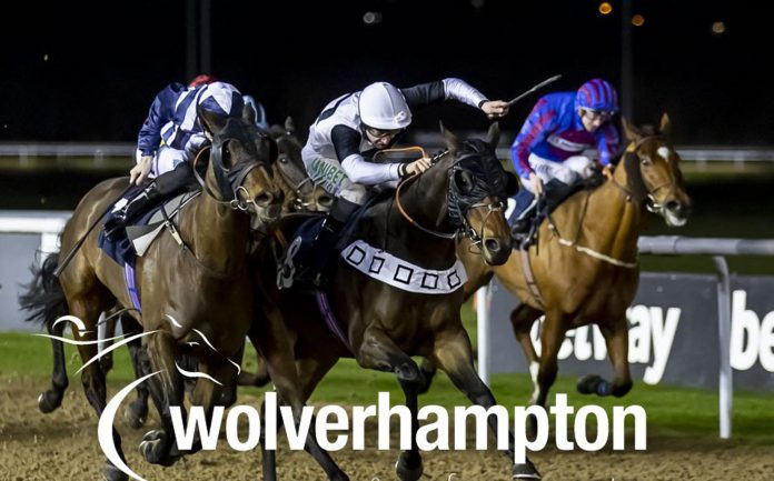 APEX Predator (7.45) is set to strike at Wolverhampton's evening meeting on Saturday