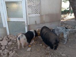 Happy Animales Orihuela-Finca Villamartin