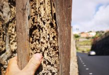 Termite Terror in Tenerife