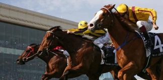 Tips to Increase Your Betting Skills on Horse Racing