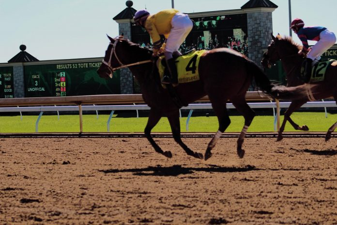 Doubling Your Earnings When Betting For The 2019 Preakness Stakes. Photo by Whitney Combs on Unsplash