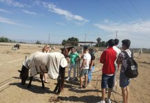 Rojales Council continues to collaborate with Easy Horse Care Rescue Centre.