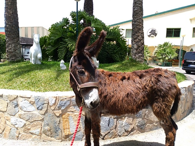 Another 2 rescued equines arrived at Easy Horse Care Rescue Centre last week