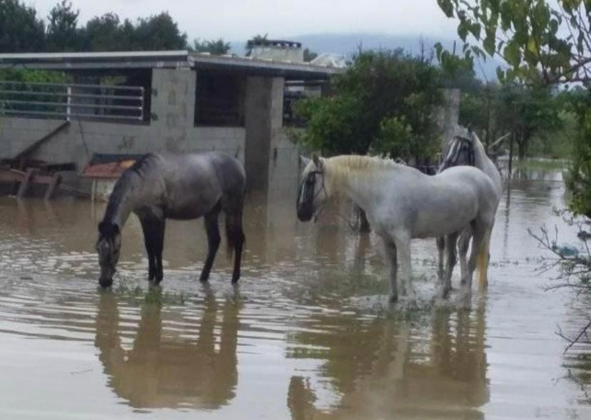 *Horses and stables in the aftermath of the Gota Fria.