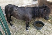 Crevillente small female pony rescued 12th August 2019
