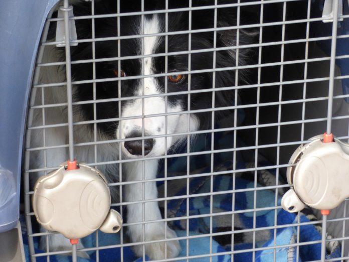 Doggone Disaster of BrexPet
