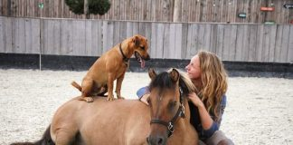Rocko sits on top of Cowboy, with international star trick-rider Emma Tytherleigh in Germany.