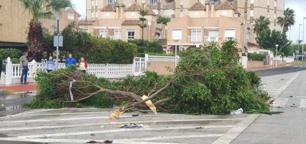 The wind was so fierce it actually felled a tree in the middle of Guardamar