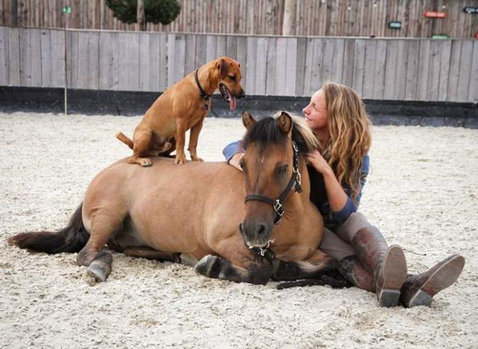 Spain's showgirl Emma rocked as International horse show Gefahrten Des Lichts ends