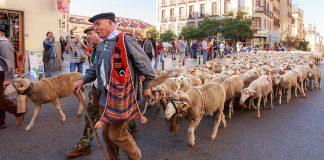 Fiesta de la Trashumancia, Madrid.