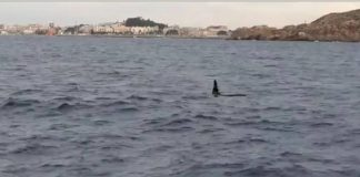 Four killer whales spooted off the coast of Cartagena