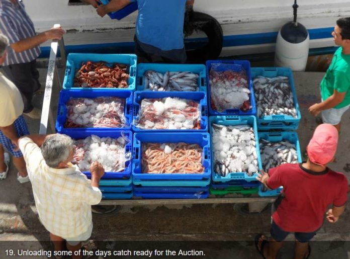 Undersized seafood confiscated at port of Altea