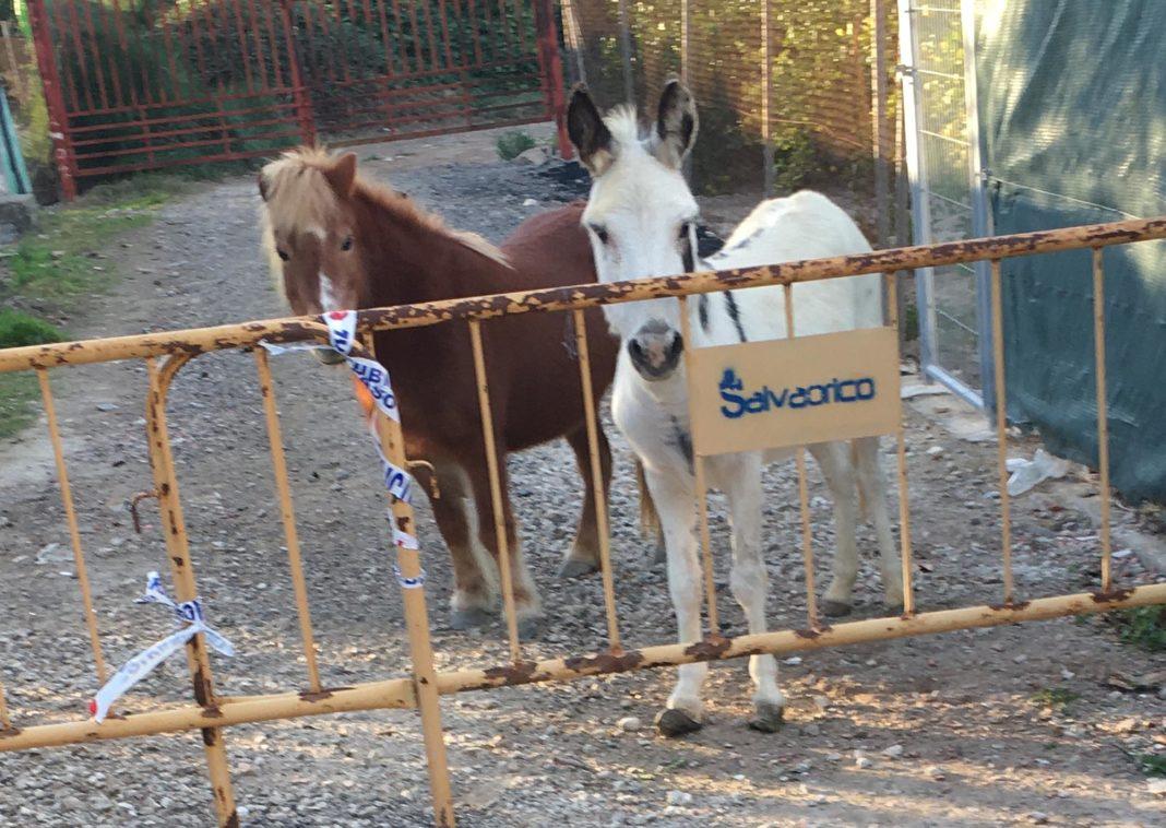 An Equine Nativity