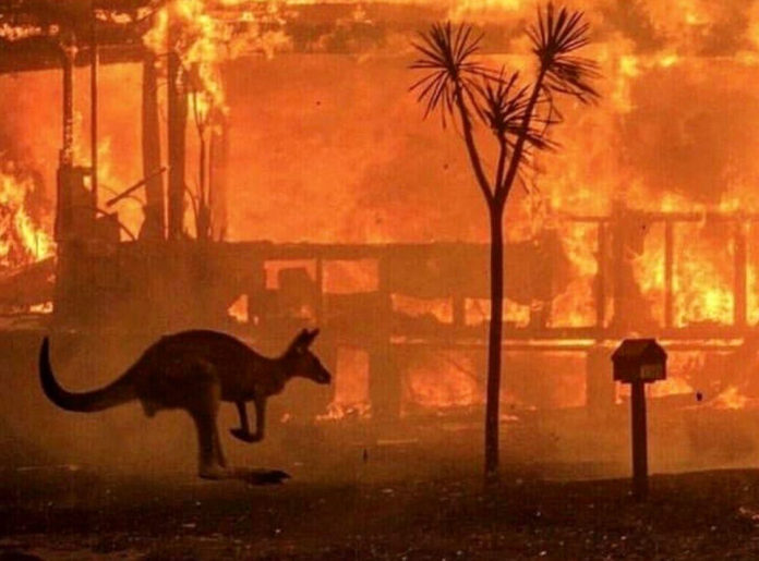 24 people charged in Australia for causing forest fires deliberately