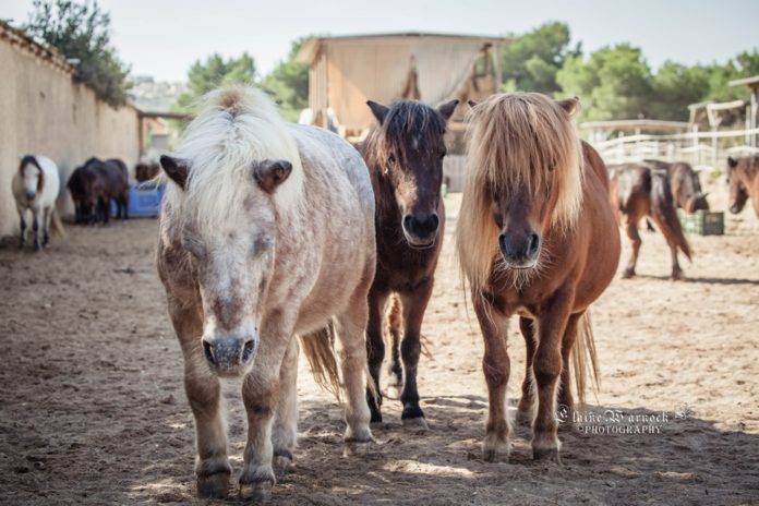 Easy Horse Care, again on the brink!