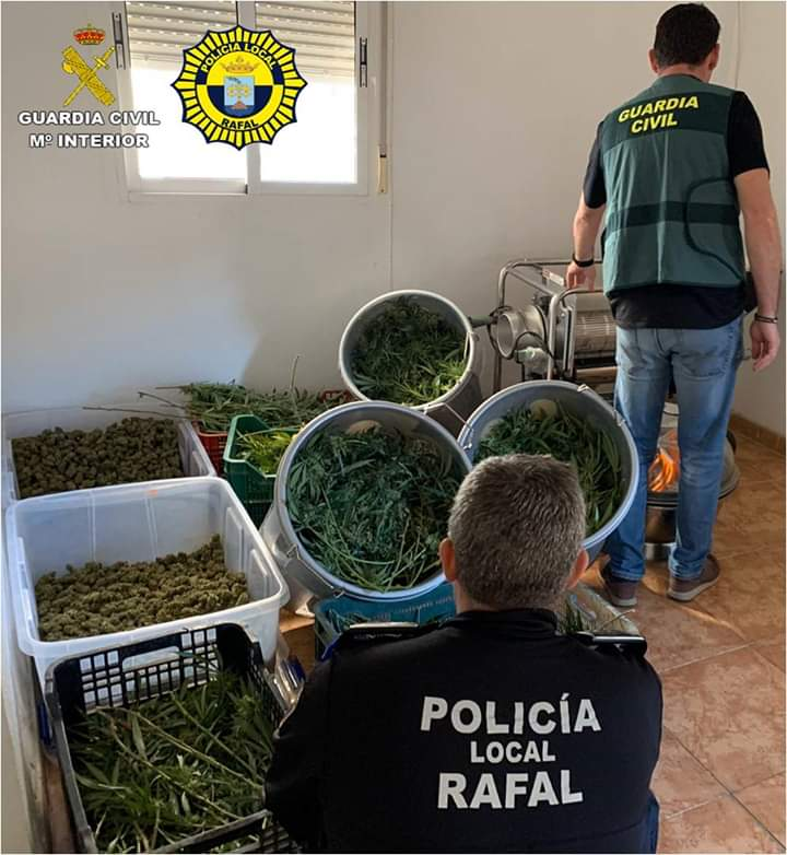 Marijuana plantation drug bust by Guardia Civil following tip-off from Rafal Policia. Photo: Guardia Civil.