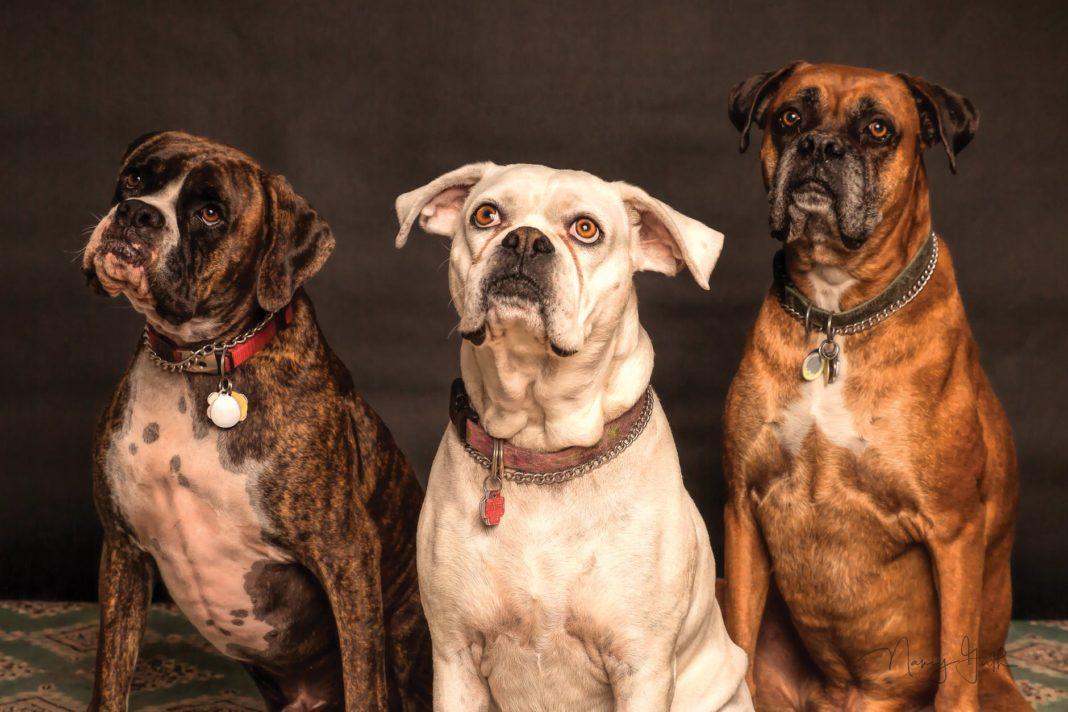 Unique Dog Traits Based on Breed