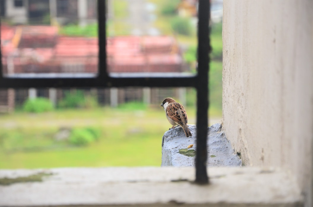 Number of sparrows in cities reduced by up to 60%