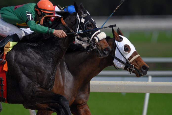 Tiz The Law and Swiss Skydiver win Florida Derby and Gulfstream Park Oaks