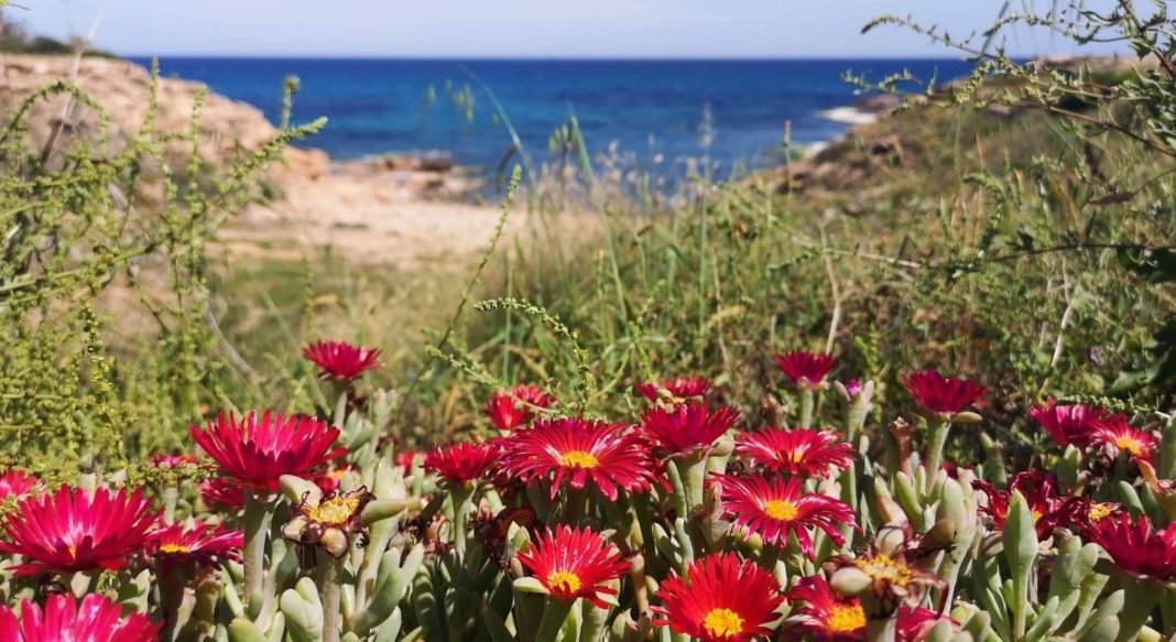 Costa Blanca enjoys best air quality in 30 years