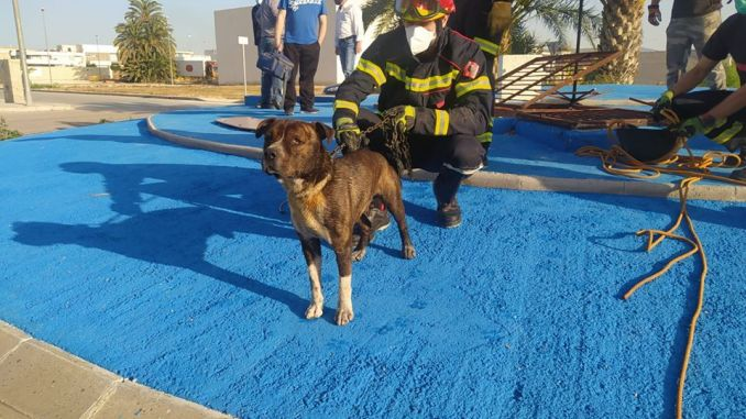 Firefighters rescue a dog from a ditch