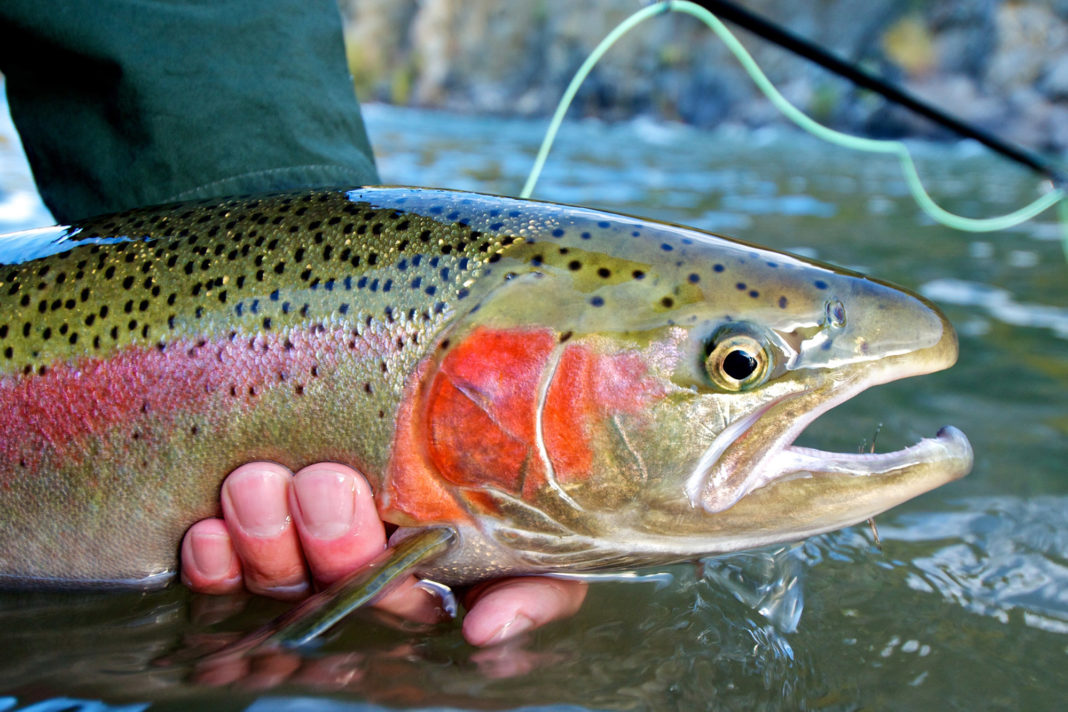 9 Things You Should Bring When You Go Fly Fishing