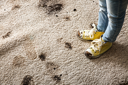 Eco-Friendly Carpet Cleaning Solutions For Your Home