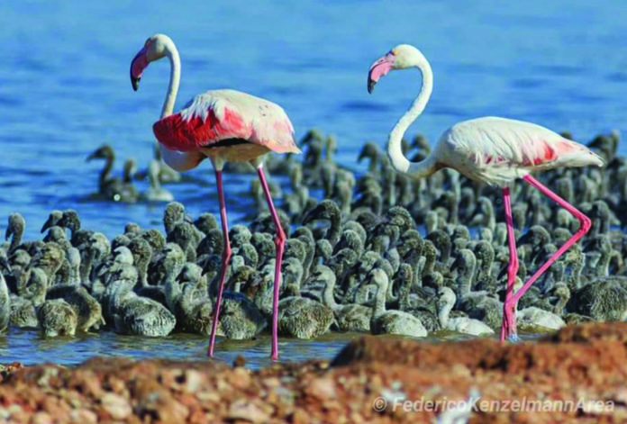 Beach life in Torrevieja for Flamingo!