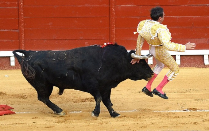 Ole! Matador Enrique Ponce suffered injury when a bull gored him during a bullfight in Spain.