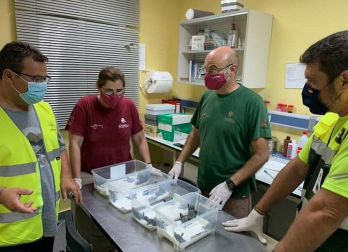 Newly-born turtles in safekeeping at IMIDA centre in San Pedro del Pinatar