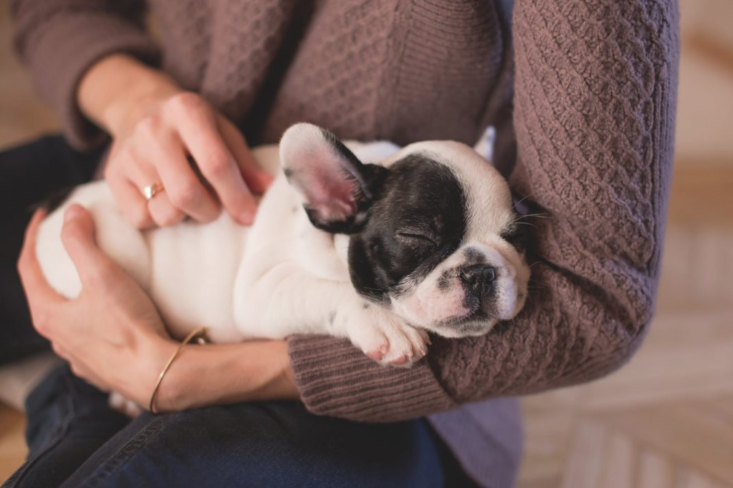 Can Your Pets Benefit from CBD Oil?