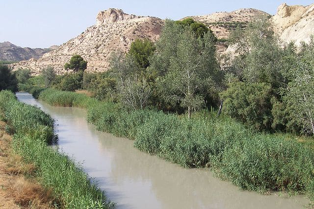 Does the clearing of reeds in the river Segura serve a useful purpose?