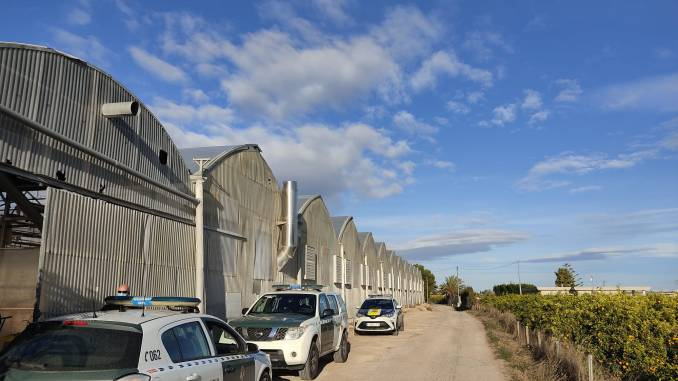 Cox Local Police find a cannabis greenhouse