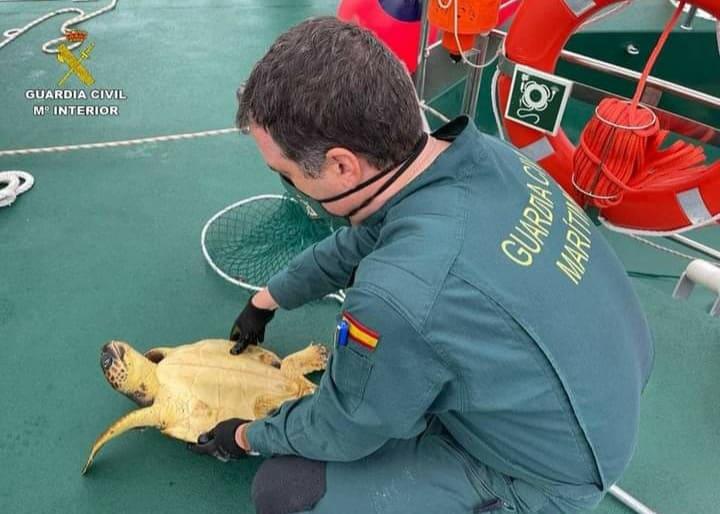 Loggerhead turtle rescued