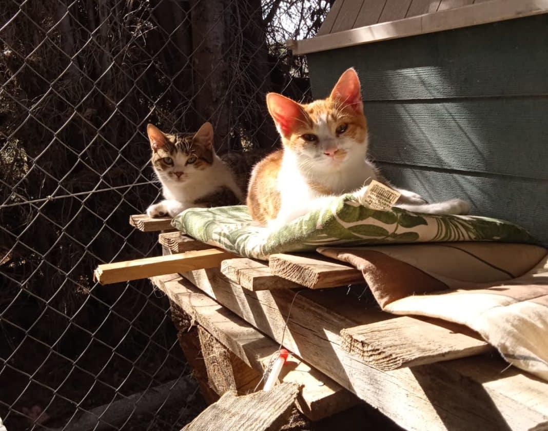 Promoting responsible pet ownership in San Fulgencio