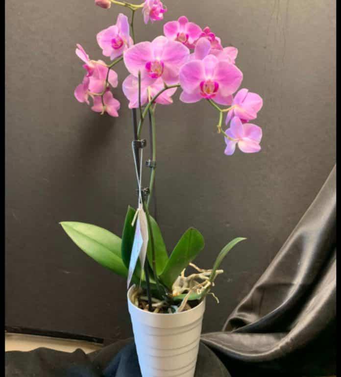 Garden Felix: Orchids, a wonderful plant
