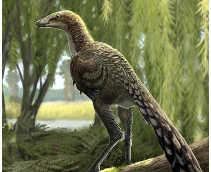 66m year old Dinosaur bone found in Spain