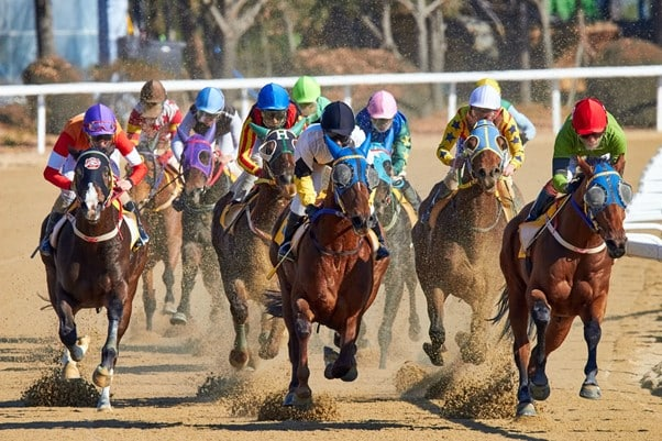 How to bet and earn from horse racing?