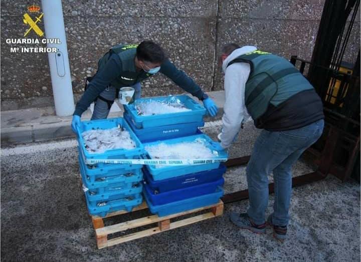 Civil Guard siezes 110 kilograms of illegal hake in Altea
