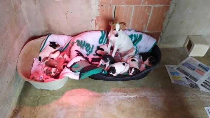 Finca la Castellana Animal Welfare