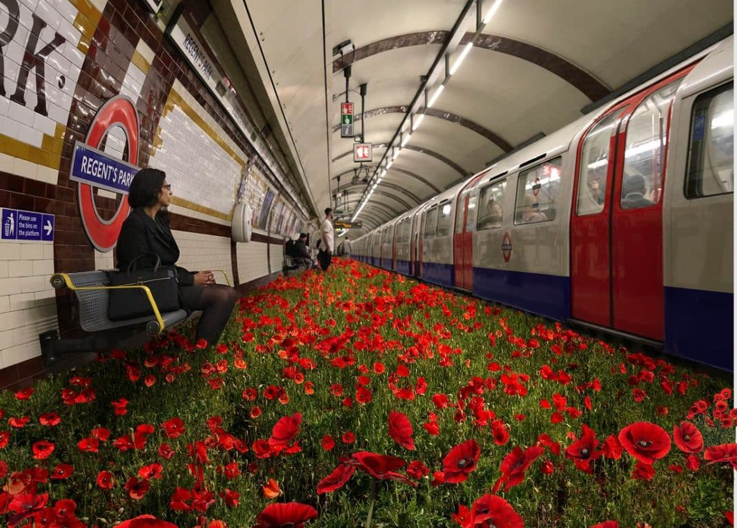 Keep Calm and Support The Poppy Appeal!