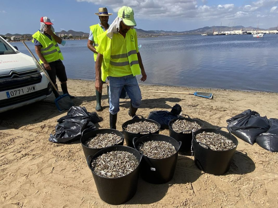 Eight beaches closed on Mar Menor after influx of dead fish