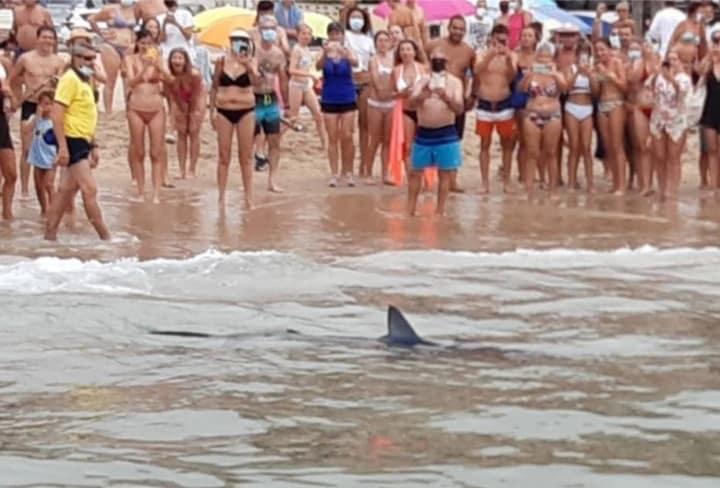 Beachgoers look on in amazement at blue shark in Benidorm